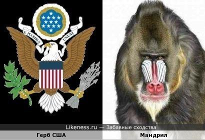 Герб США и мандрил
