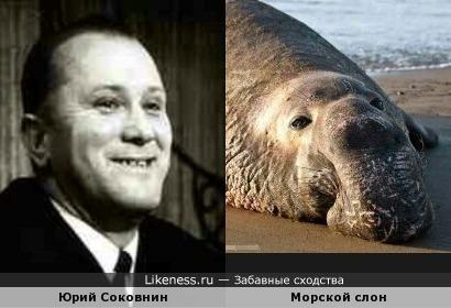 Юрий Соковнин и морской слон