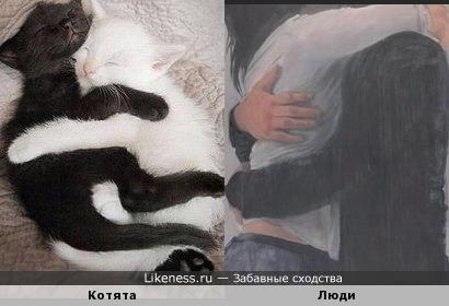 Инь и ян или объятия кошек и людей