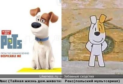 Сходство собачек