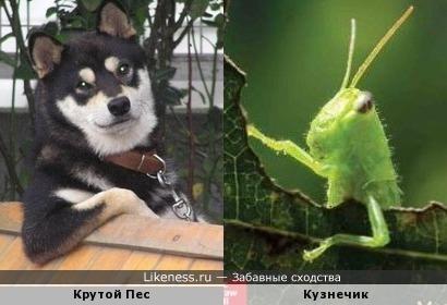 Крутой Пес и Кузнечик похожи