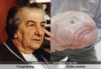 Голда Меир напоминает рыбу-каплю