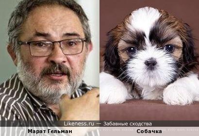 Марат Гельман похож на маленькую собаку Ши-Тцу