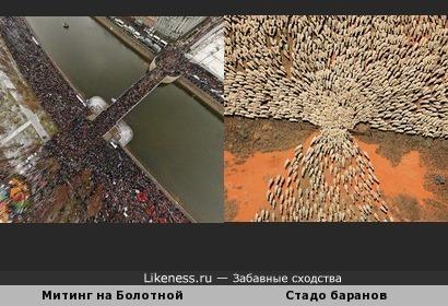 Участники митинга на Болотной площади похожи на стадо баранов