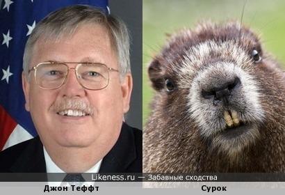 Посол США в Москве Джон Теффт похож на сурка