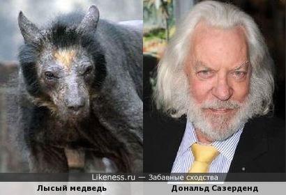 Лысый медведь выглядит как Дональд Сазерденд