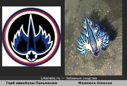 Герб израильской авиабазы похож на морского слизняка
