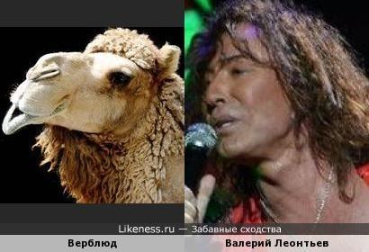 Верблюд Валерий