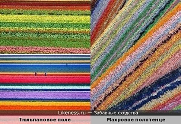 Тюльпановое поле похоже на махровое полотенце