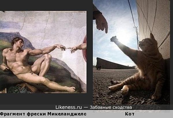 Котик напомнил Адама на фреске Микеланджело