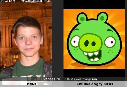 Илья Лазуренко похож на свинку из angry birds