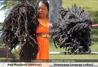 Волосы как у собаки))))