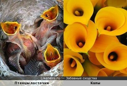 Новорожденные птенчики как цветочки