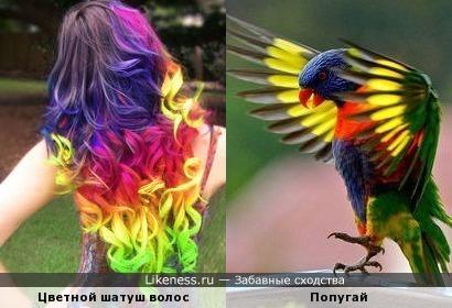 - Кто на свете всех цветнее, ярче всех и всех моднее?