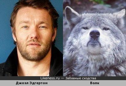 Уж не знаю, почему, но этот волк напоминает мне актера Дж. Эдгертона