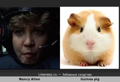 Нэнси Аллен похожа на Морскую Свинку