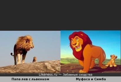 Папа лев с львенком похож на Муфасу и Симбу