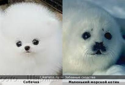 Милые белые и пушистые создания