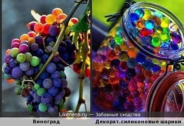 Виноград напоминает разноцветные силиконовые ширики