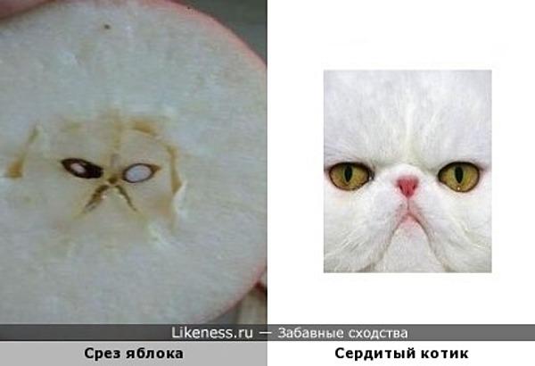 Срез яблока напомнил котика