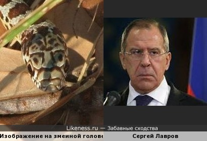 "Очертания ""лица""на голове змеи напомнили Сергея Лаврова"