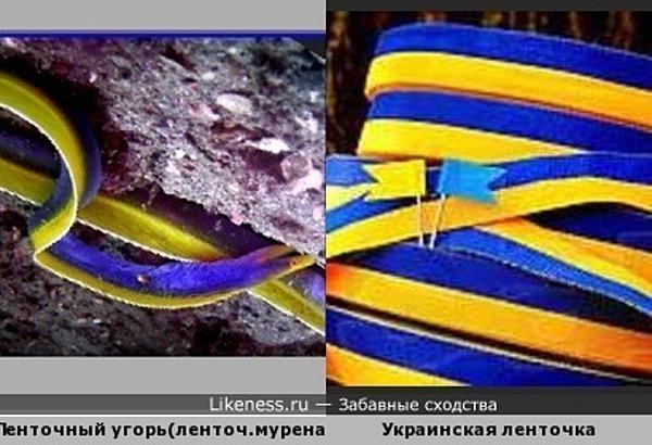 Голубой ленточный угорь цвета украинской символики