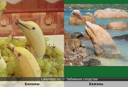 Дельфины:бананы и камень