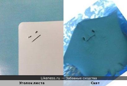 Фрагмент листа со скрепками напомнил ската