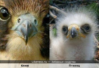 клюв какой-то хищной птицы похож на маленького орла