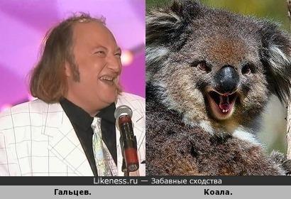Гальцев похож на коалу.