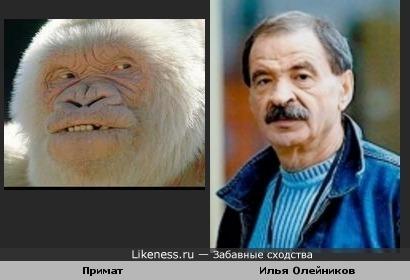 Илья Олейников напоминает данного Примата