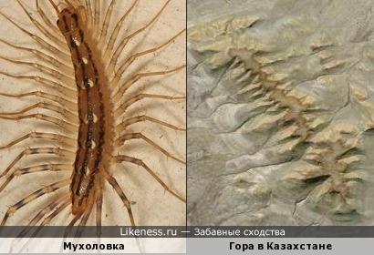 Мухоловка похож на гору в Казахстане