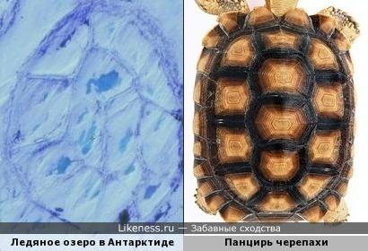 Ледяное озеро в Антарктиде похож на панцирь черепахи.