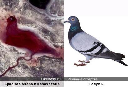 Красное озеро в Казахстане похож на голубя.