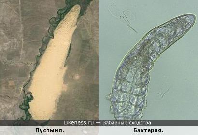 Пустыня в Казахстане похоже на бактерию.