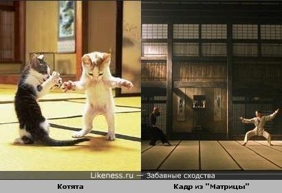 "Котята напомнили кадр из ""Матрицы"""