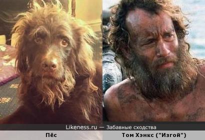 Пёс похож на Тома Хэнкса