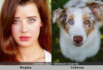 Девушка, это ваша собака?