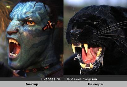 Аватар похож на пантеру