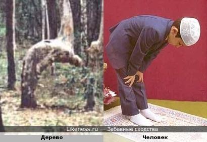 Дерево делает намаз как человек