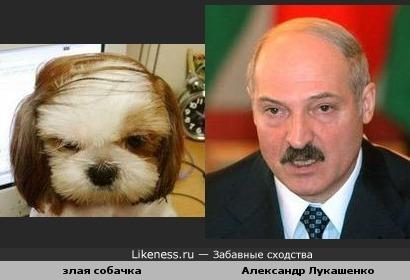 Злая собачка похожа на Александра Лукашенко