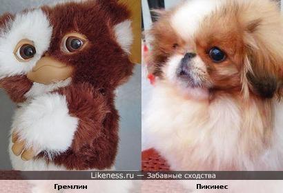 Гремлин похож на пикинеса