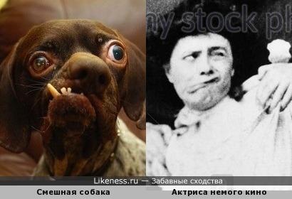Собачка и актриса