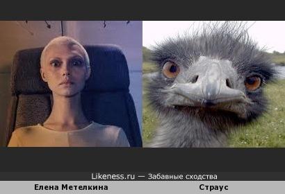 Елена Метелкина похожа на страуса