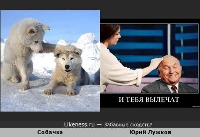 Собачка похожа на Лужкова