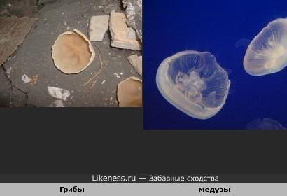 Грибы похожи на медуз