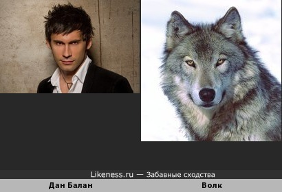 Дан Балан похож на Волка