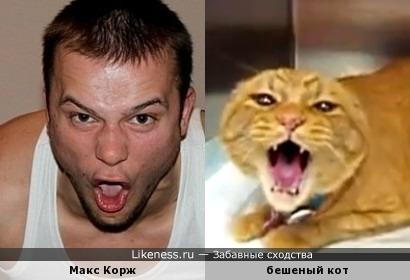 Макс Корж и бешеный кот