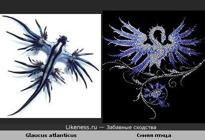 Моллюск похож на сказочную синюю птицу.