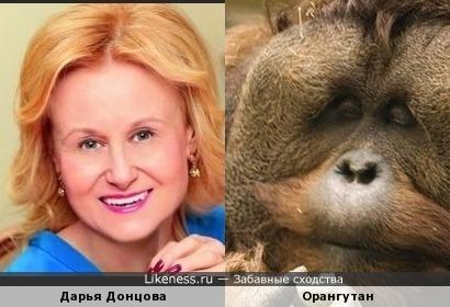 Дарья Донцова vs Орангутан